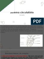 Sistema circulatório.pdf