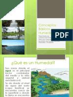 Conceptos Sobre Humedales