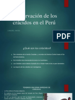 Conservación de los crácidos en el Perú.pptx