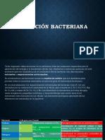 Nutrición-bacteriana