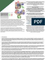 La neuroarquitectura.pptx
