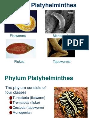 dysbiosis cure