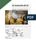 Glándula mamaria de la cabra.docx
