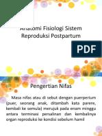 anatomi fisiologi postpartum