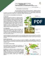 Guía 2 Circulacion - 7