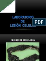 lab. macro lesion celular 02-2018.pptx