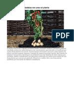 Cultivar tomates e batatas em uma só planta.docx