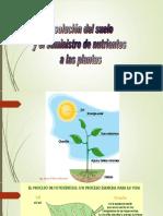 MECANISMO DE ABSORCION.pptx