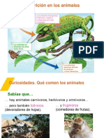 curiosidades nutricion.pps