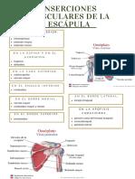 Inserciones musculares de la escápula