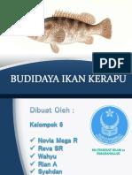 Budidaya Ikan Kerapu_Kelompok 6.pptx