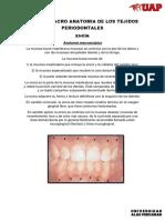 Micro y Macro Anatomia de Los Tejidos Periodontales