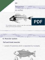 1. Fish Anatomy