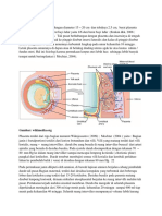 263854702-Anatomi-plasenta.docx