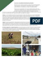 caracteristicas de una comunidad eminentemente productiva.docx