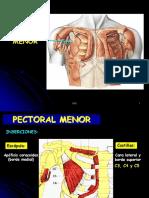 2- Musc pectorales.pptx