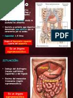 4- Estomago.pptx
