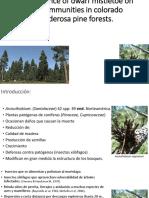 The Influence of Dwarf Mistletoe on Bird Communities in Colorado Ponderosa Pine Forests.