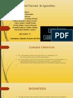 cetogenesis.odp