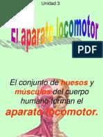 15. Sistema Locomotor Informacion