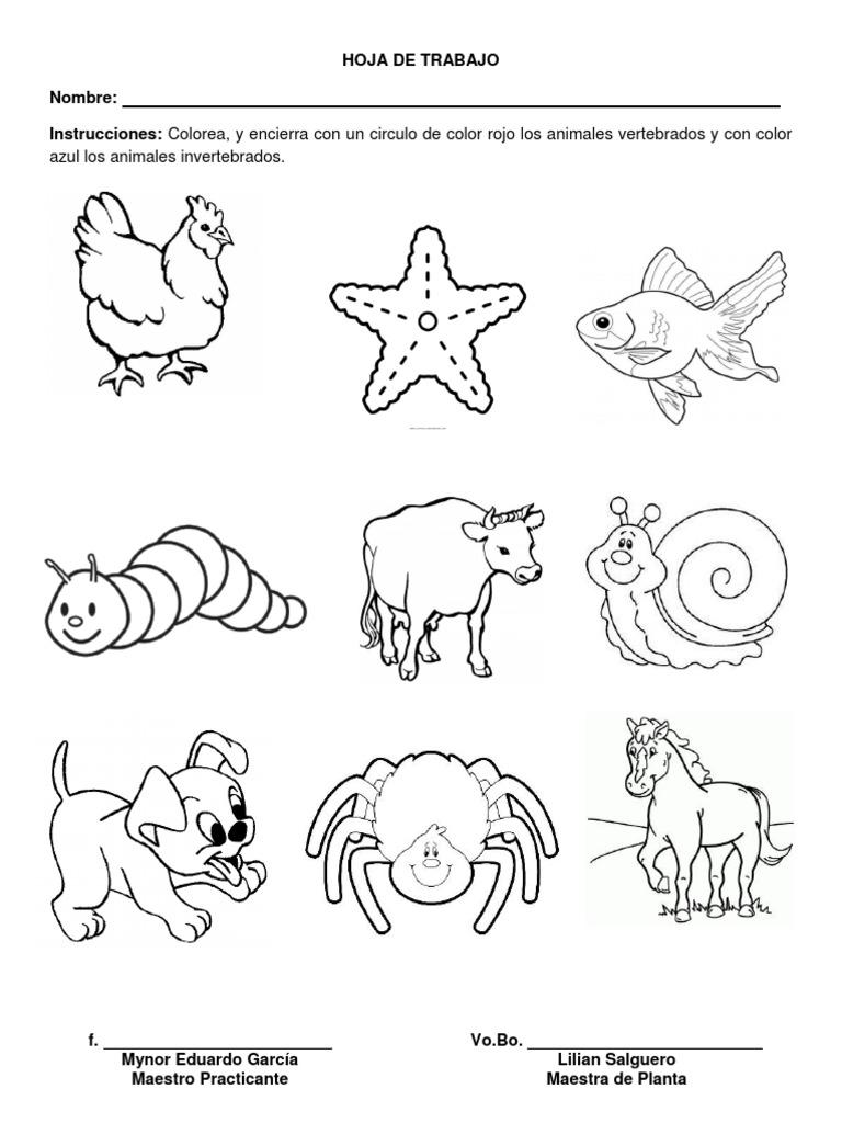 Imagenes De Animales Invertebrados Para Dibujar