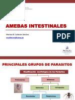 TEORIA 02 Amebas intestinales.pdf