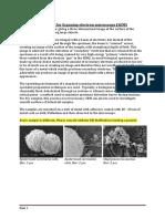 SEM sample preparation.pdf