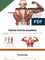 Sistema musculo esquelético.pptx