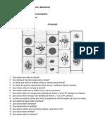 ATIVIDADE  - DIVISÃO CELULAR.docx