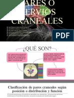 Pares Craneales SNyE 19-1