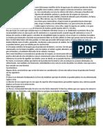 La Producción Forestal Se Define Como