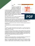 CARACTERÍSTICAS DEL SISTEMA TEGUMENTARIO HUMANO.docx