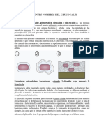 DIFERENTES NOMBRES DEL GLUCOCALIX.docx