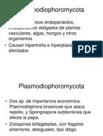 Plasmodiosphoramycota