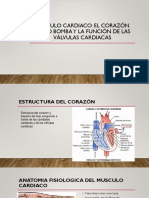 Musculo Cardiaco Ok