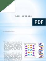 Expo_modelos de Adn