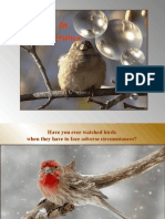 The_Birds-IG-PR
