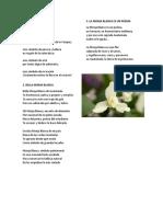 Poemas a La Monja Blanca
