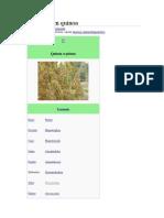 Chenopodium quinua
