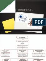 Neuronas y Glias