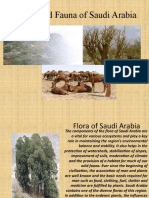 Flora and Fauna of Saudi Arabia