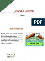 histologia vegetal 2