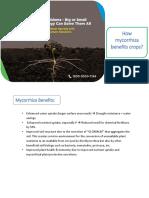How Mycorrhiza Benefits Crops