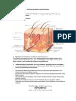 Histología del aparato genital femenino