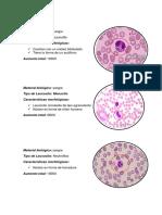 Celulas Del Sistema Inmunitario