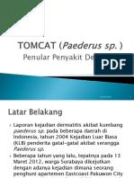 TOMCAT (Paederus Sp
