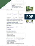 Calabacuin - Buscar Con Google