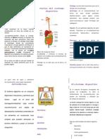 Sistema Digestivo Triptico Docx