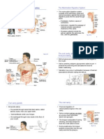 BIOL 114 -4- Mammalian Digestive System