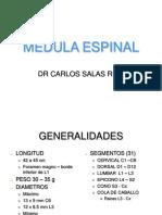 Anatomía Médula Espinal
